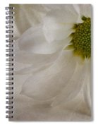Chrysanthemum Textures Spiral Notebook