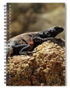 Chucka Walla Basking Spiral Notebook