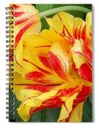 Cinco De Mayo Spiral Notebook