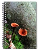 Cinnamon Polypore  Spiral Notebook