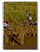 Cinnamon Teal Pair In Flight Spiral Notebook