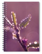 Circles From Nature - M01sqm Spiral Notebook