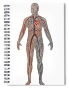 Circulatory System In Male Anatomy Spiral Notebook