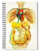 Circulatory System Spiral Notebook