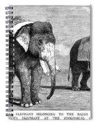 Circus Elephants, 1884 Spiral Notebook