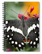 Citrus Swallowtail Butterfly  Spiral Notebook