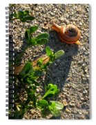 City Snail From Above Spiral Notebook
