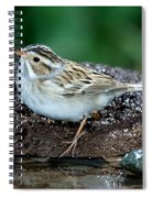 Clay-colored Sparrow Spizella Pallida Spiral Notebook