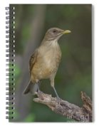 Clay-colored Thrush Spiral Notebook