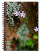 Claytonia And Rust Spiral Notebook
