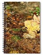 Clean Stream Spiral Notebook