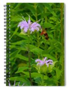 Clear-winged Hummingbird Moth Spiral Notebook