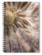 Clematis Seedpod Close Up Spiral Notebook