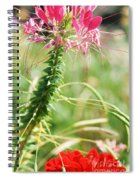 Cleome Hassleriana Spiral Notebook