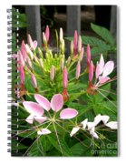 Cleome Named Cherry Queen Spiral Notebook