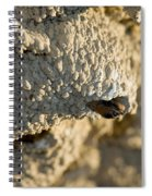 Cliff Swallow About To Fledge Spiral Notebook