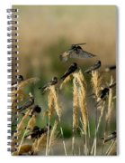 Cliff Swallows Perched On Grasses Spiral Notebook