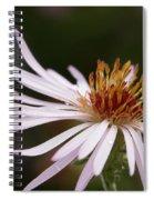 Climbing Aster Spiral Notebook