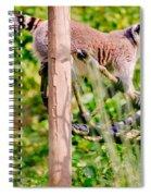 Climbing Lemur Spiral Notebook