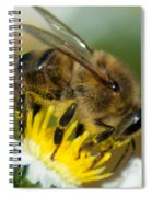 Close Encounter Of The Bee Kind Spiral Notebook