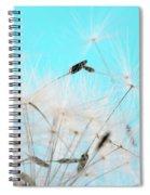 Close-up Dandelion Seeds Against Blue Spiral Notebook