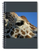 The Giraffe's Eye Spiral Notebook