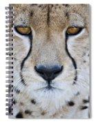 Close-up Of A Cheetah Acinonyx Jubatus Spiral Notebook