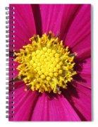 Close Up Of A Cosmos Flower Spiral Notebook