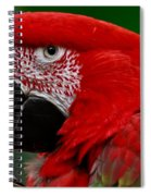 Close Up Of A Gorgeous  Green Winged Macaw Parrot. Spiral Notebook