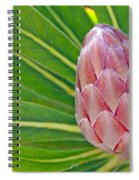Close Up Of A Protea In Bud Spiral Notebook