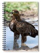 Close-up Of A Tawny Eagle Aquila Rapax Spiral Notebook