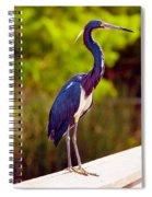 Close-up Of An Blue Egret, Boynton Spiral Notebook