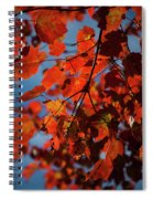 Close Up Of Bright Red Leaves With Blue Spiral Notebook