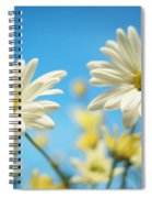 Close-up Of Daisies Against A Blue Spiral Notebook