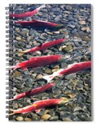 Close-up Of Fish In Water, Sockeye Spiral Notebook