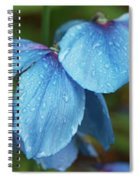 Close-up Of Himalayan Poppy Flowers Spiral Notebook