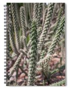 Close Up Of Long Cactus With Long Thorns  Spiral Notebook