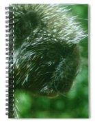 Close Up Of Mr Porcipine Spiral Notebook