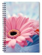 Close Up Of Two Pink Gerbera Daisies Spiral Notebook