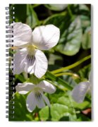 Close-up Of White Violets  Spiral Notebook