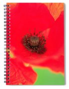Close Up Poppies Spiral Notebook