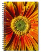 Close Up Yellow Orange Mum Spiral Notebook