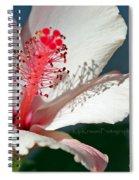 Flight Of A Bee  Spiral Notebook