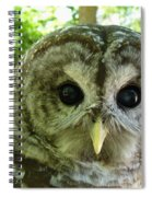 Closeup Of A Barred Owl Spiral Notebook