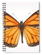 Closeup Of A Butterfly Spiral Notebook