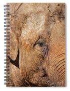 Closeup Of An Elephant Spiral Notebook