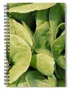 Closeup Of Boston Lettuce Spiral Notebook