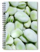 Closeup Of Fresh Fava Beans Spiral Notebook