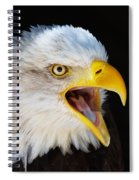 Closeup Portrait Of A Screaming American Bald Eagle Spiral Notebook