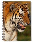 Closeup Portrait Of A Siberian Tiger  Spiral Notebook